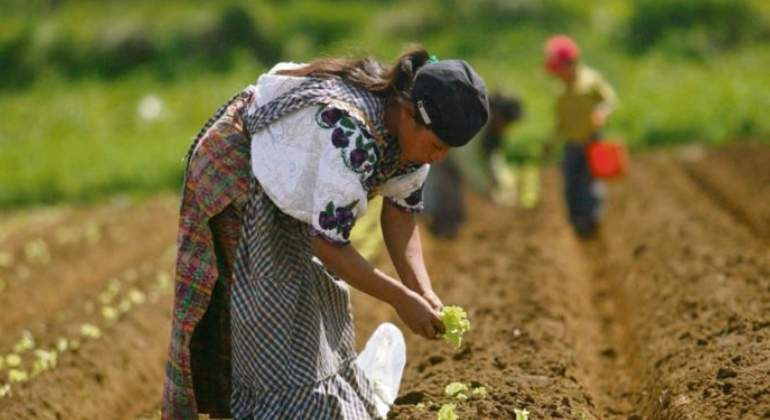 Los pueblos de Latinoamérica luchan contra la imposición de transgénicos